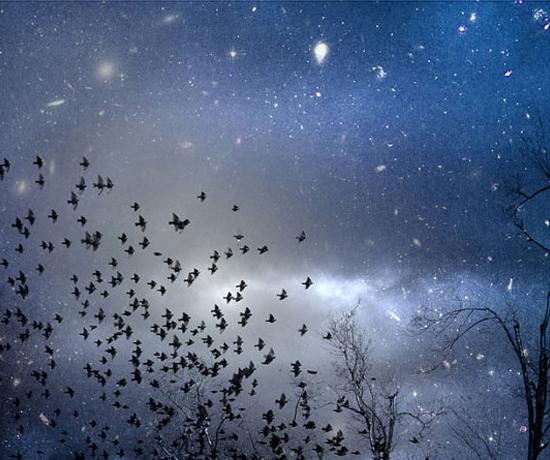 flock of birds metallic print photograph