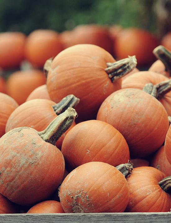 Pumpkin Photography