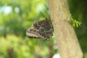 Patterned Butterfly Wings