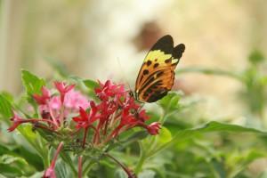 Butterflies Inspiratons