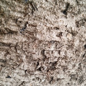 Tree Trunk Texture - Pattern Photo by Noa Ambar Regev