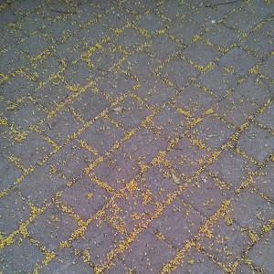Yellow flowers in cracks - Pattern Photo by Noa Ambar Regev