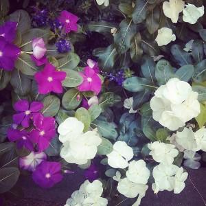 Flowers Pattern Photo by Noa Ambar Regev